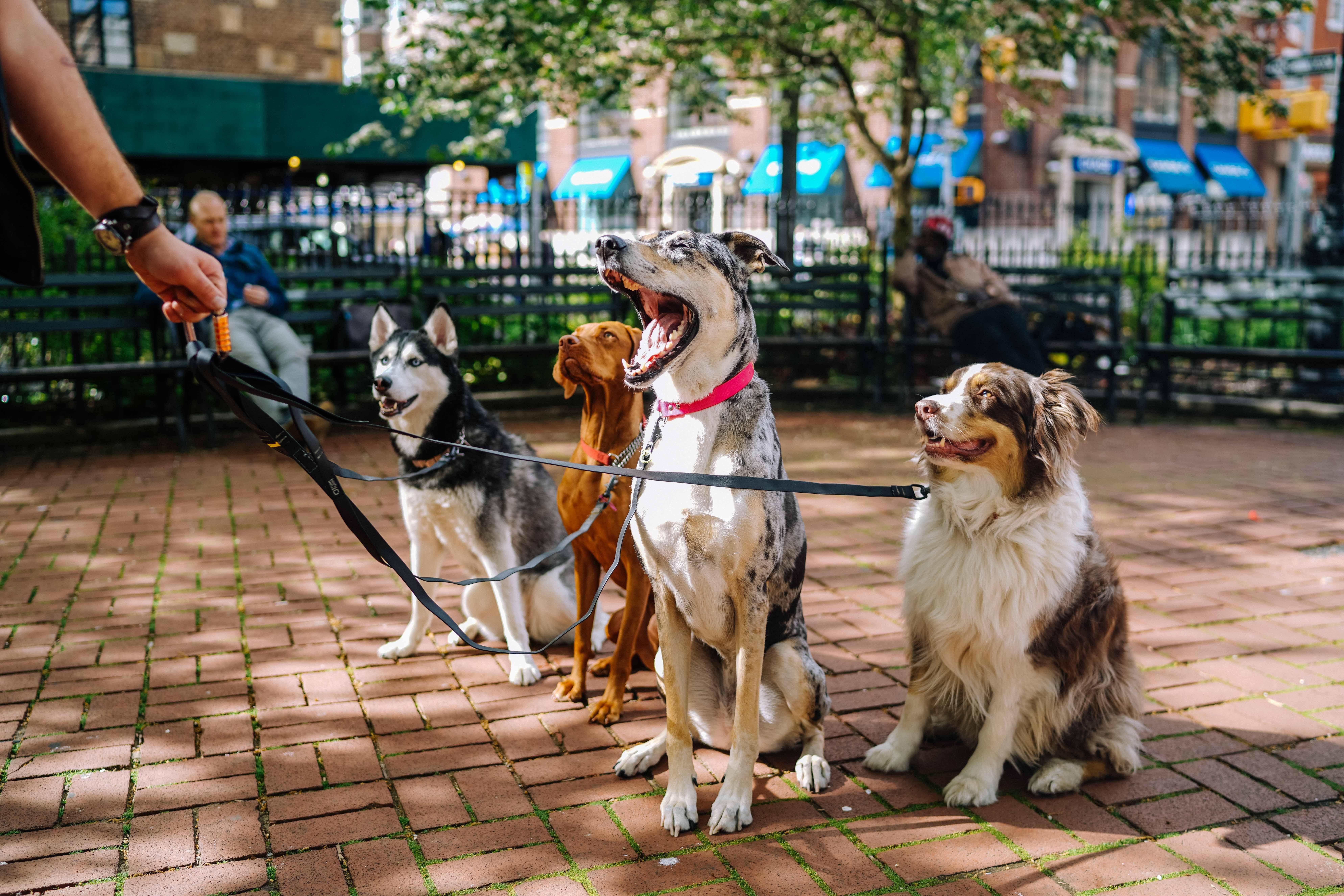 Miejsca przyjazne zwierzętom w Olsztynie. Photo by Matt Nelson on Unsplash